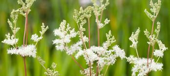 Spondylarthrite : des solutions naturelles méconnues (5) - Alternative Santé