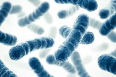 Des micro-organismes lactobacillus Reuteri colonisent l'intestin
