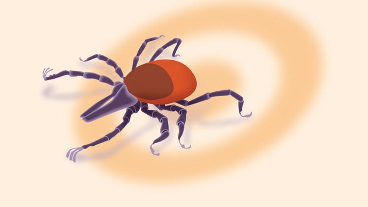 Lyme, la maladie qui fait transpirer la médecine