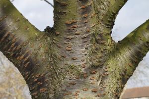 Les écorces d'arbre, nouvelle frontière dans la lutte contre l'antibiorésistance ?