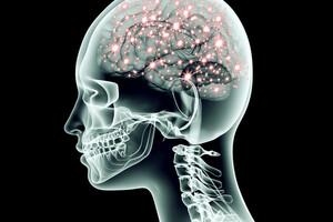 La modification du microbiote intestinal a des effets sur des récepteurs cérébraux.