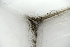 Les moisissures, un danger pour la santé