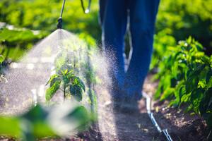 Les insecticides augmentent le risque de leucémie