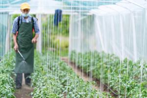 Des pesticides coniennent arsenic et métaux lourds....