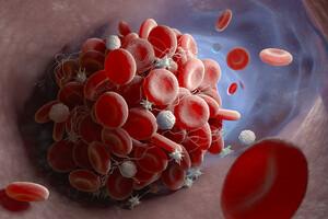 Les plaquettes sont connues pour leur rôle dans la coagulation du sang.