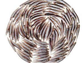 Les sardines, protectrices du cerveau