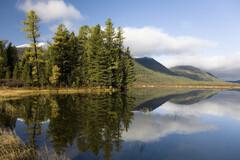 Certaines forêts de Sibérie orientale, envahies de nouvelles tiques