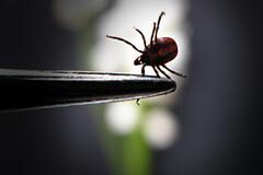 Maladie de Lyme : un tour d'Europe des pratiques