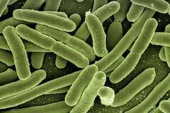 Parasites : ils sont toujours là