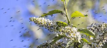 Virus Zika: les pistes de la phytothérapie  - Alternative Santé