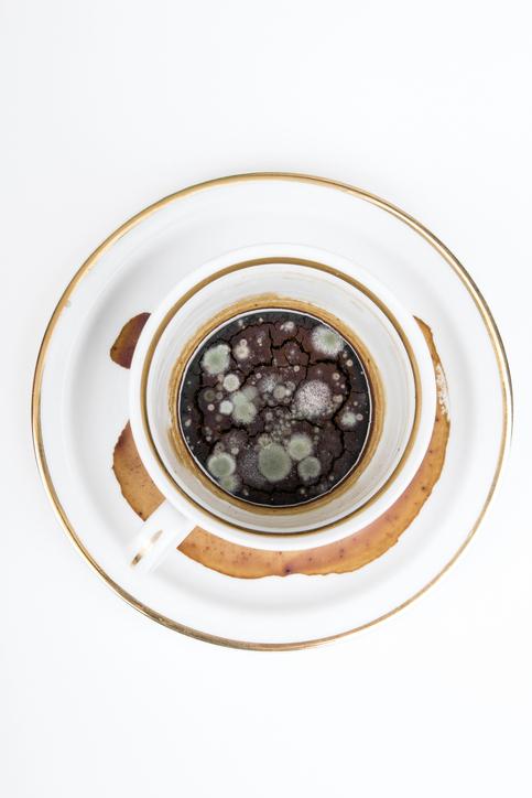 Marc de café, mare à bactéries ?  Vos machines et tasses à café au microscope