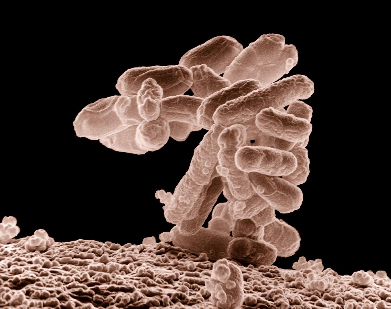 Microbiote : promesses thérapeutiques et périls médicamenteux