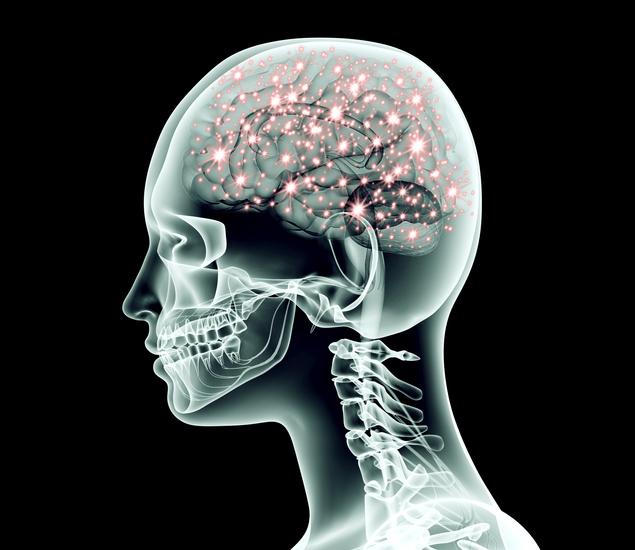 Des probiotiques pour lutter contre les migraines ?