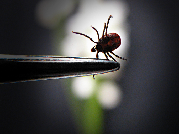 Maladie de Lyme :<br> un tour d'Europe des pratiques